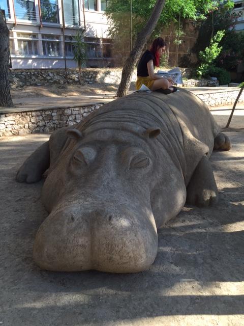 hippo - IMG_1069