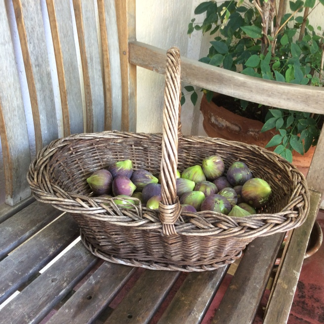A basket of freshly-picked, sun-warmed figs
